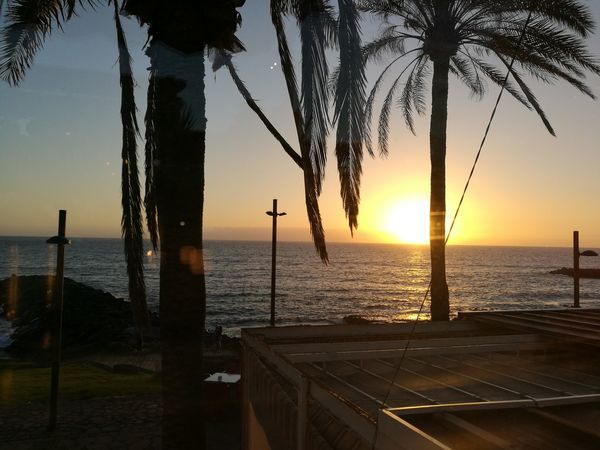 Tenerife SPAIN Paradise Sunset Beach Sea View PALMTREES 🌴🌴🌴 Outdoors Tranquility Peace ✌