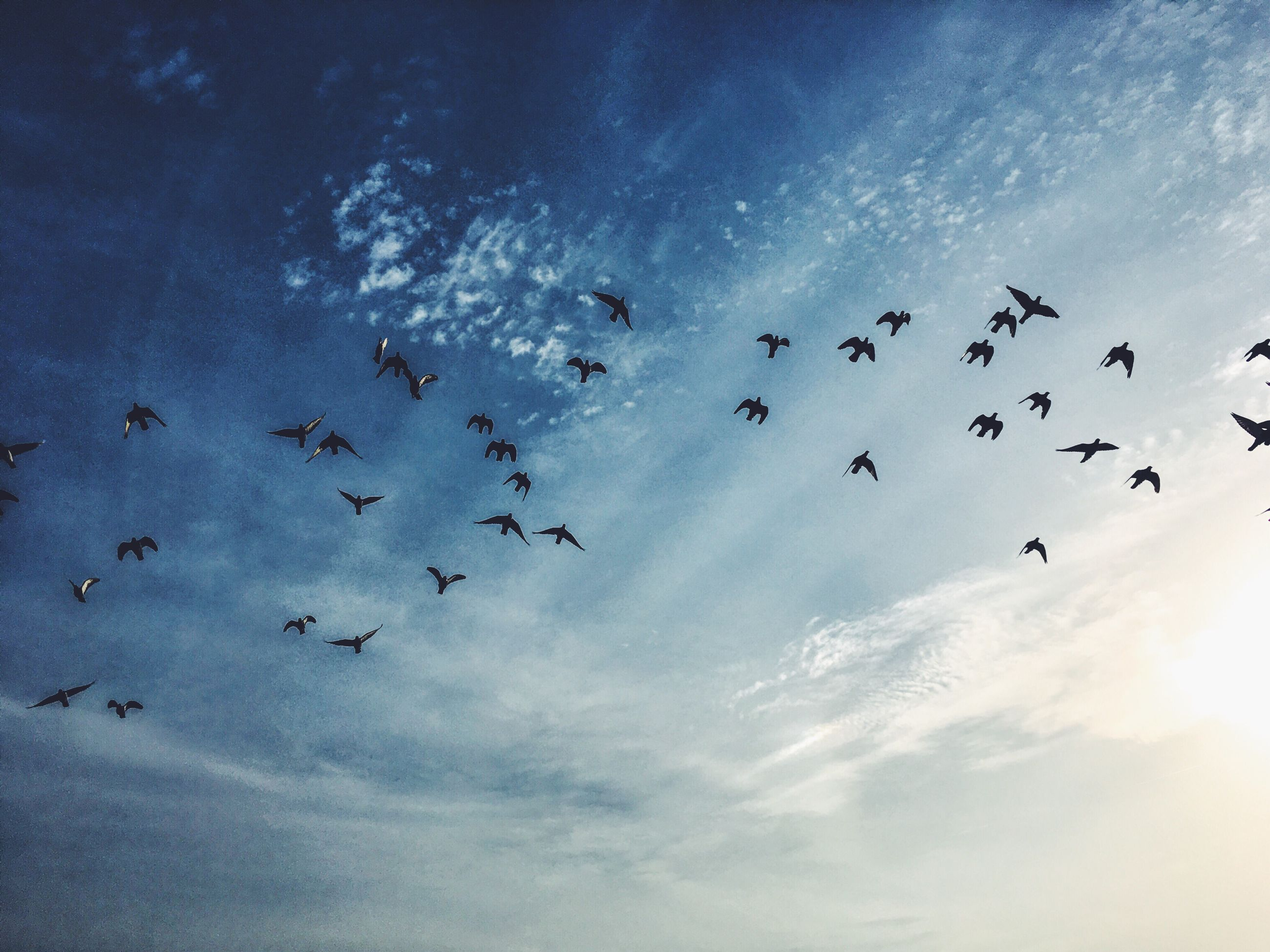 flying, large group of animals, animal themes, sky, bird, flock of birds, animals in the wild, animal wildlife, mid-air, cloud - sky, nature, beauty in nature, no people, togetherness, outdoors, day