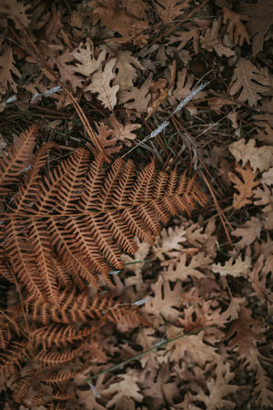 Fern Ferns Wallpaper Backgrounds Background Texture Fall Winter Autumn Autumn Leaves Leaf Plant Part Dry Close-up Nature Plant Land No People High Angle View Day Field Leaves Brown Outdoors Beauty In Nature Forest Growth Full Frame