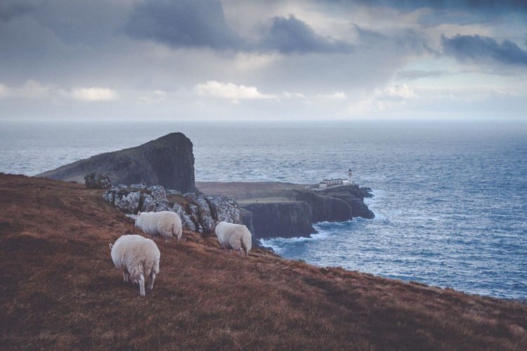 Animal Themes Cloud - Sky Domestic Animals Livestock Mammal Nature Neist Point Neist Point Lighthouse No People Outdoors Scenics Scotland Scotlandsbeauty Sea Sheep Sky Tranquil Scene Tranquility Uk Water