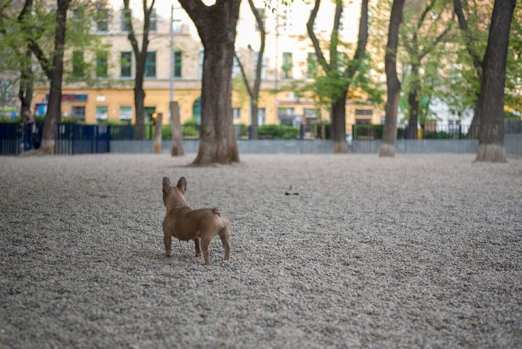 View of a dog on the ground