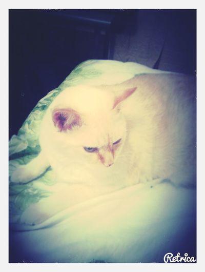 Я любшю моего котика;3 First Eyeem Photo
