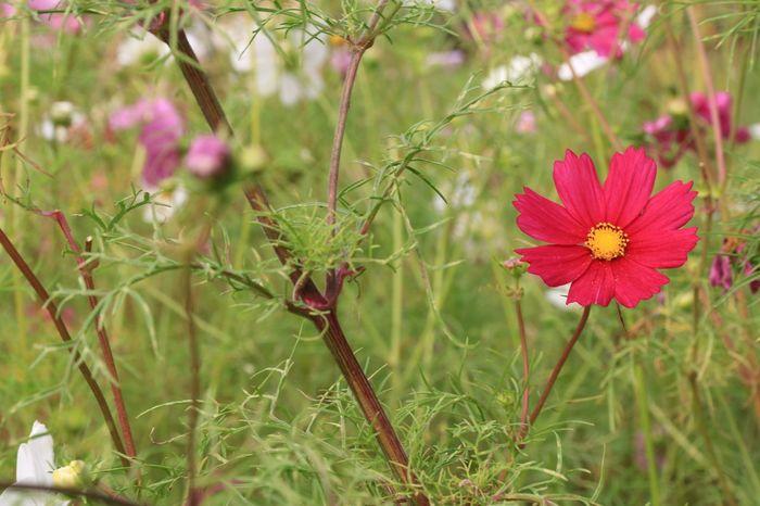 Flower Plant Nature Flower Head Fragility