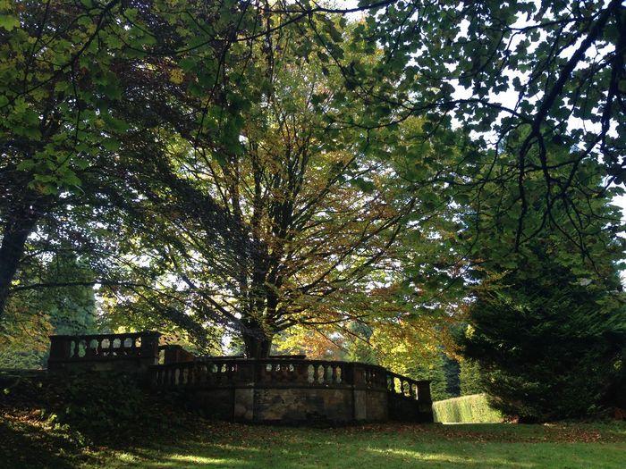 16.10.15 Scotland Taking Photos Summer Lanfine Forest