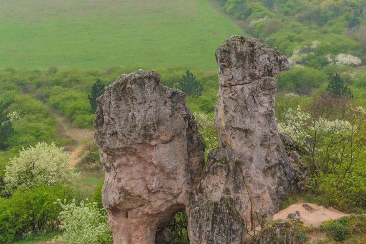 Nature Hiking Hungary Rock Kéktúra Camel Pilis