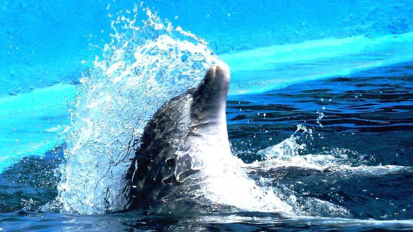 Dauphin Animaux EyeEm Best Shots Swimming Merveilleux Souvenir