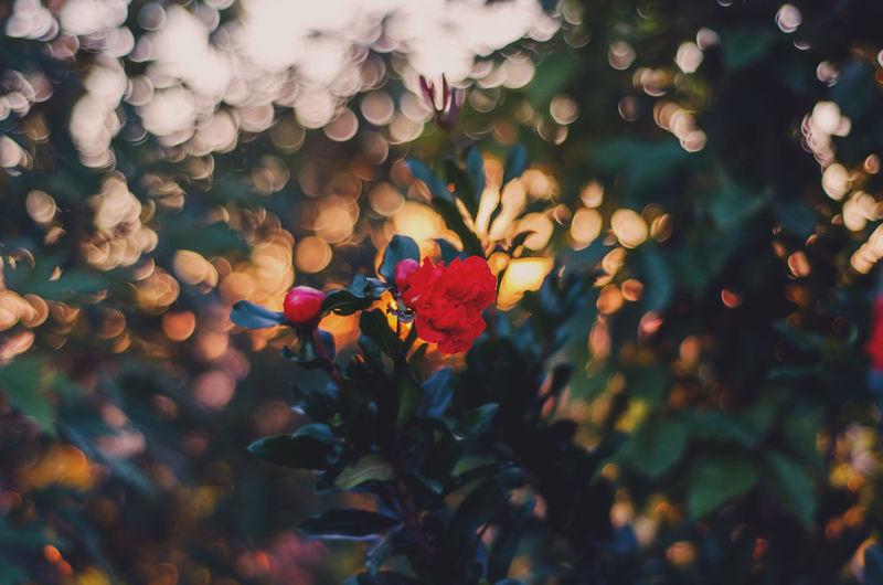 Flowers Spring Flowers Flower Sunset Sun Summer