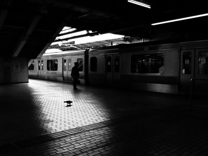 Throwback 2012 Transportation Real People Public Transportation Railroad Station Platform Animal Themes Railroad Station Indoors  Shadow One Person Day Illuminated Architecture People The Week On EyeEm Black And White Friday