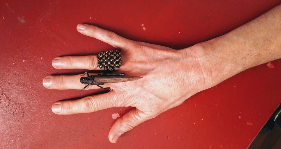 Grasshopper Insect Insect Photography Woman Portrait Red Color Human Hand Nail Polish Manicure Fingernail Nail Art Close-up Finger Hand Human Finger Personal Perspective Obscene Gesture Low Section Skin Ring Body Part
