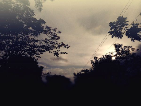 Tree Silhouette Sky Nature Dark Growth Cable Sunset No People Beauty In Nature Low Angle View Outdoors Day IPhoneography