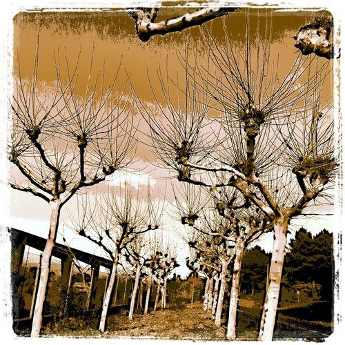 pintando los arboles Pintando... Landscapes Nature Painting