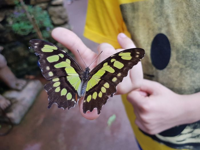 butterfly on a child hand Human Hand Butterfly - Insect Holding Insect Nail Polish Human Finger Close-up Butterfly Spread Wings