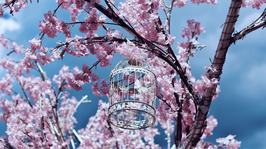 https://www.instagram.com/alyabev_ru/ Plant Tree Flowering Plant Blossom Pink Color Low Angle View Flower Day Cherry Blossom Nature Beauty In Nature Branch Growth Fragility Sky Focus On Foreground Vulnerability  Springtime No People Freshness