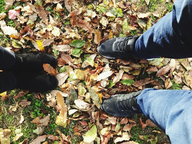 Autumn Leaf Low Section Human Leg Change Shoe Real People Jeans Standing One Person Leaves Human Body Part High Angle View Outdoors Day Fallen Personal Perspective Nature Men Lifestyles