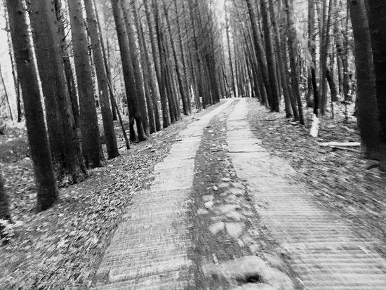 Un solo camino 😌