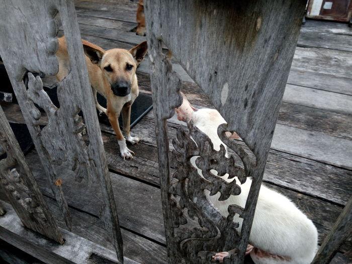 Animal Themes Dogphoto Mammal Dogslife Dog Days Domestic Animals Home Of Stray Dogs