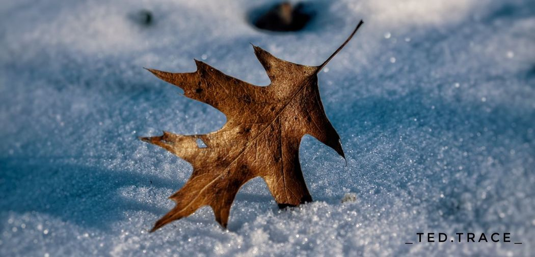 Leaf Winter Photo Cold Temperature No People Nature Outdoors Close-up Teenager Photooftheday Photography Canon50D Canonphotography