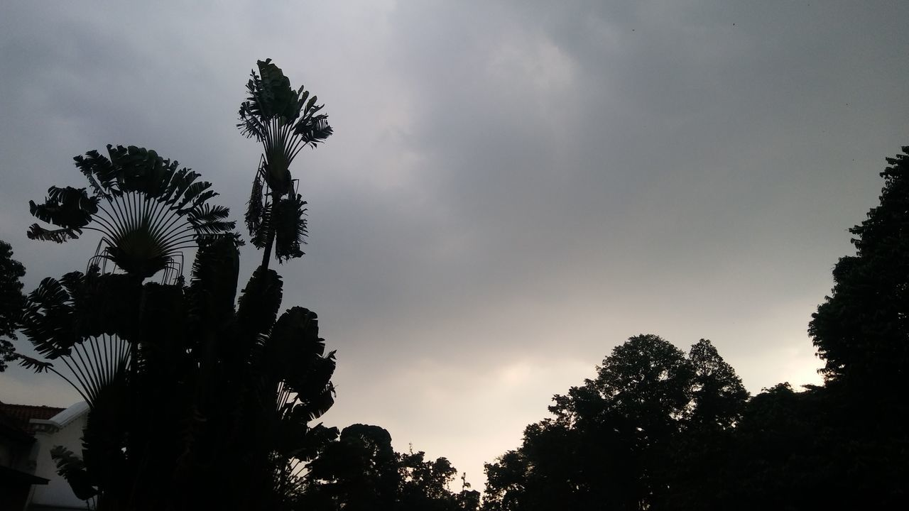 tree, low angle view, growth, sky, palm tree, nature, no people, silhouette, outdoors, beauty in nature, cloud - sky, day