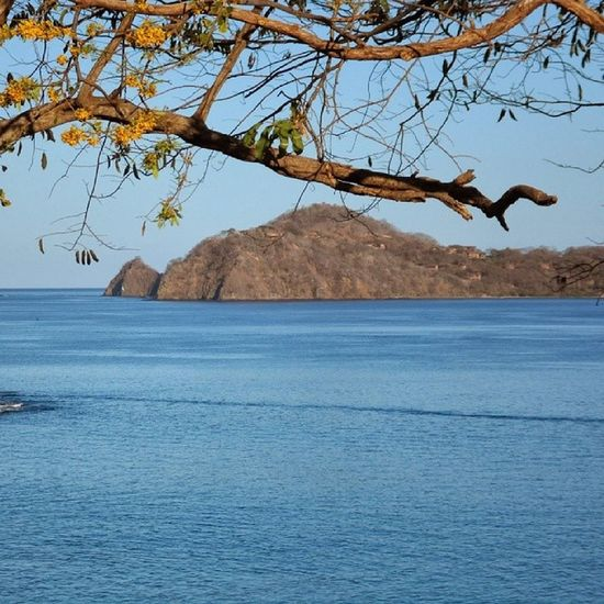 Tree Nature Sea No People Scenics Outdoors Water Day Sky Horizon Over Water Beach Beauty In Nature
