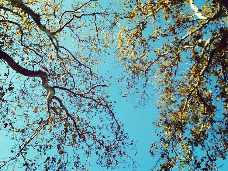 Beautiful Nature Sky And Trees ı Love Blue ♡ Travel