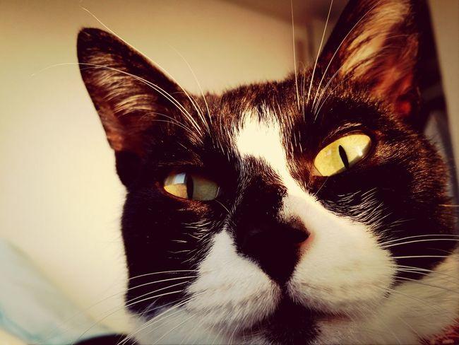おはぎさん Cat Cat Lovers