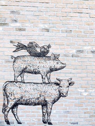 Brick Wall No People Backgrounds Modern Animal Themes Dog Pig Face Hen Chiken