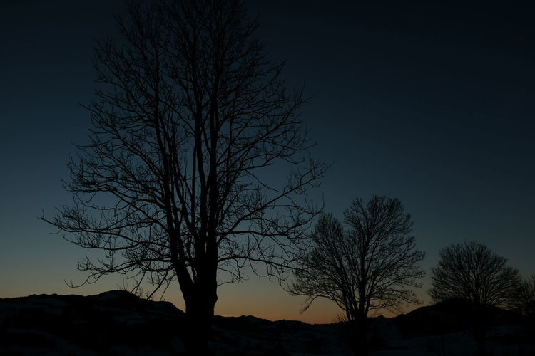 Low angle view of silhouette bare trees against clear sky