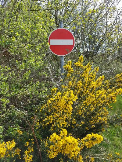 No Entry Road Sign Country Road Sign Grass Do Not Enter Sign Circular Round Growing Blooming Warning Sign The Street Photographer - 2018 EyeEm Awards