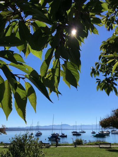 Bavaria The Alps Alps Lake Starnberg Sky Plant Tree Water Sunlight Nature Leaf Beauty In Nature Plant Part Green Color Growth Nautical Vessel Tranquility Day No People Sun Scenics - Nature Tranquil Scene Outdoors Sailboat