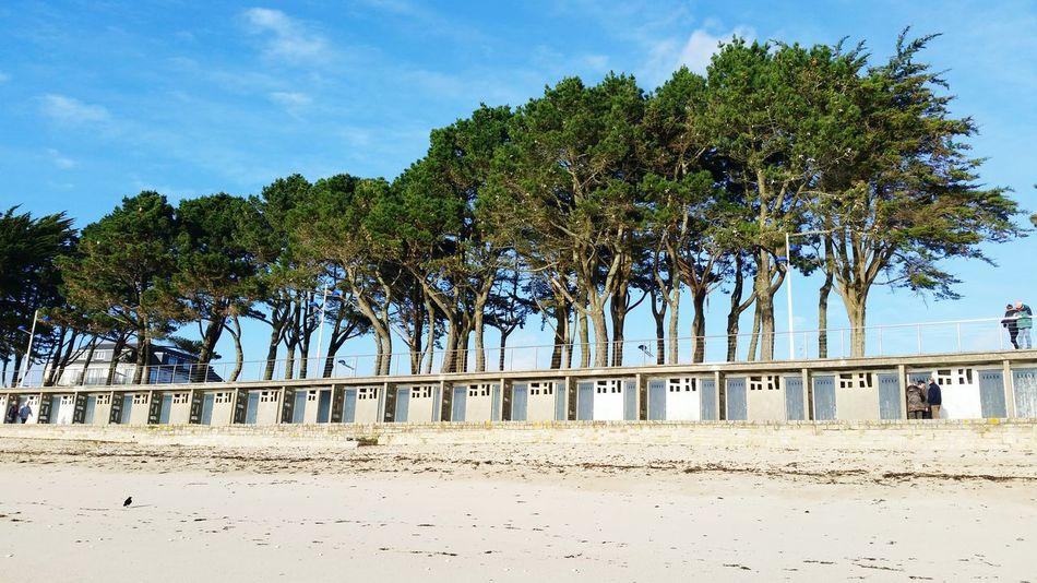 Outdoors Scenics Palm Tree Beach Sand Landscape Backgrounds Beautifully Organized Benodet French France 🇫🇷 Beach Huts Beach Holiday Holidays ☀