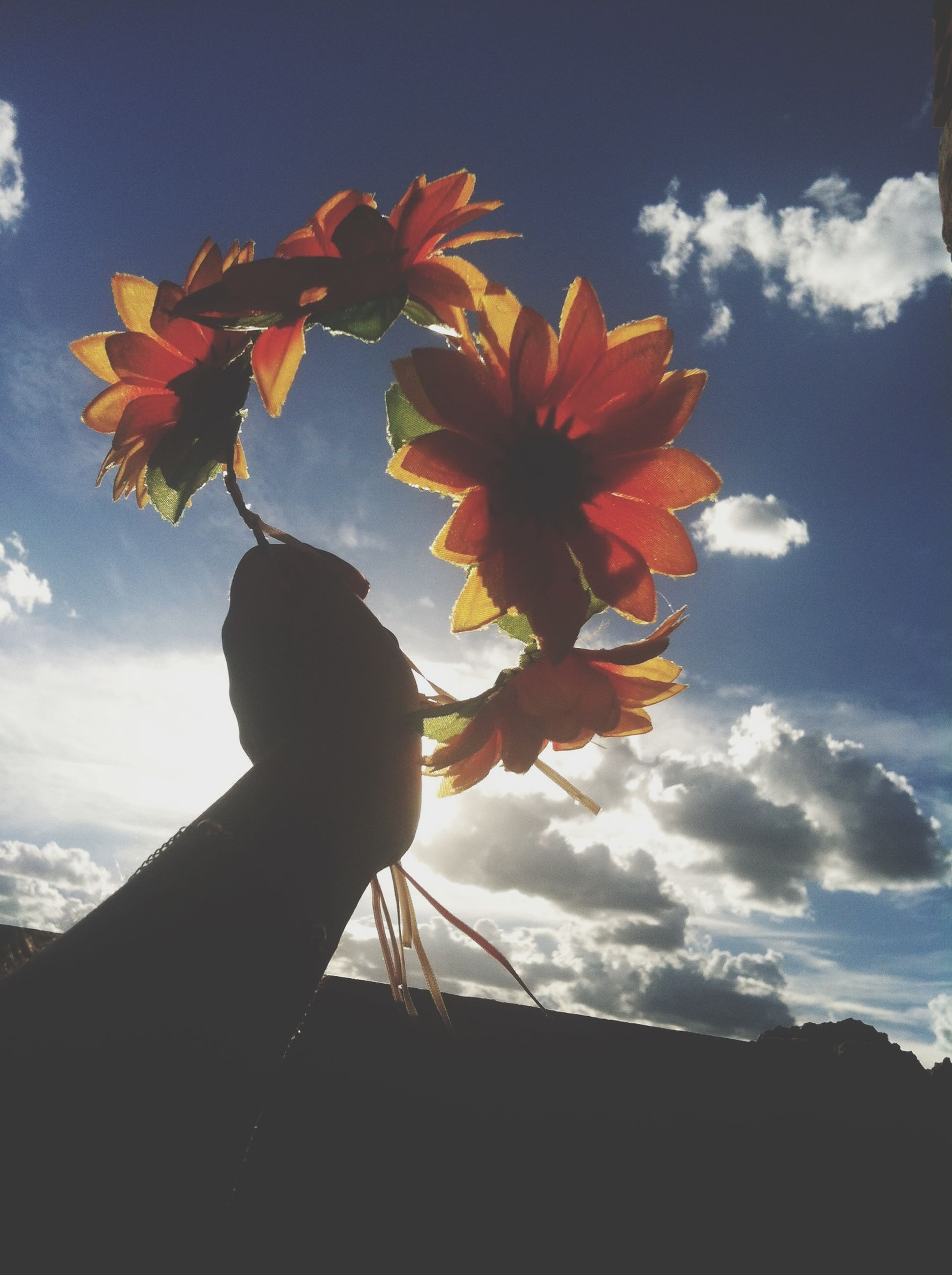 sky, flower, low angle view, cloud - sky, beauty in nature, nature, fragility, petal, growth, cloud, one person, freshness, close-up, plant, leaf, silhouette, part of, sunlight, person, orange color
