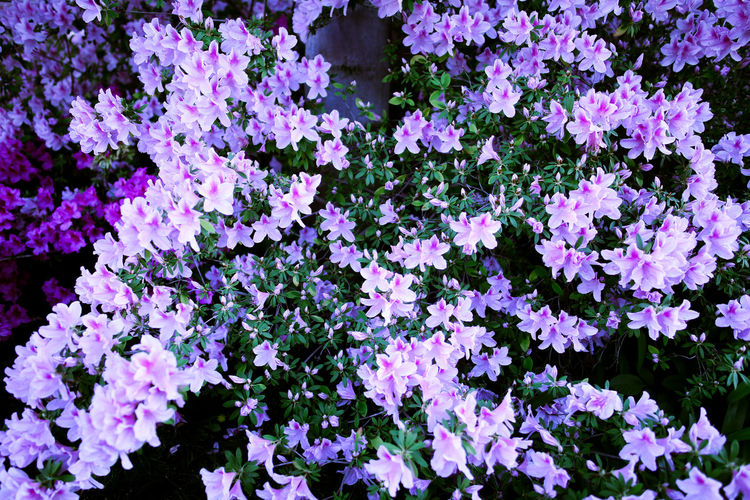 Beauty In Nature Day Flower Freshness Growth Nature No People Outdoors Plant Purple