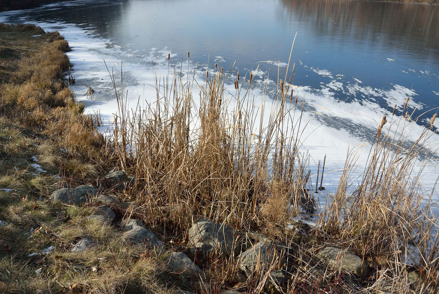 Day Frozen Lake Frozen Lake, Frozen Lakes Lake Lakeshore Nature No People Non Urban Scene Non-urban Scene Outdoors Park Parks Water Willow Willow Catkins Willows