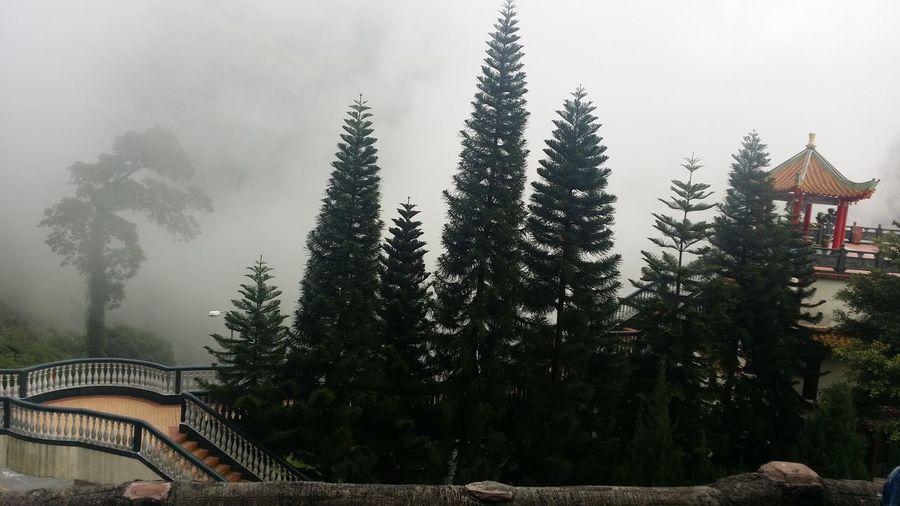 Architecture Fog Imazing Nature Relaxing Moments Riligion Travel Destinations Tree