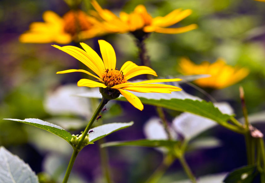 Flowers Beauty In Nature Blooming Flower Flower Head Fragility Freshness Growth Nature No People Outdoors Petal Plant Yellow