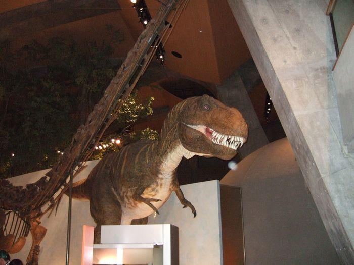 Dinosaur Japan Museum Rex Tyrannosaurus ティラノサウルス 博物館 富岡市 恐竜 群馬県