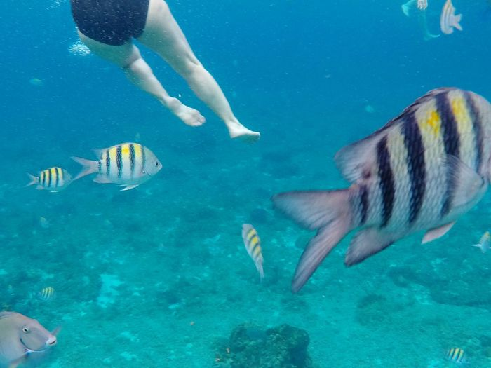Low angle view of woman swimming in the middle of fishes