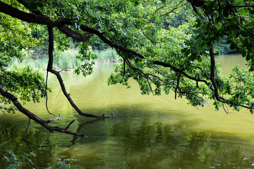 Schlaubetal Tadaa Community Beauty In Nature Branch Day Forest Green Color Growth Lake Nature No People Non-urban Scene Outdoors Plant Reflection Scenics - Nature Tranquil Scene Tranquility Tree Water