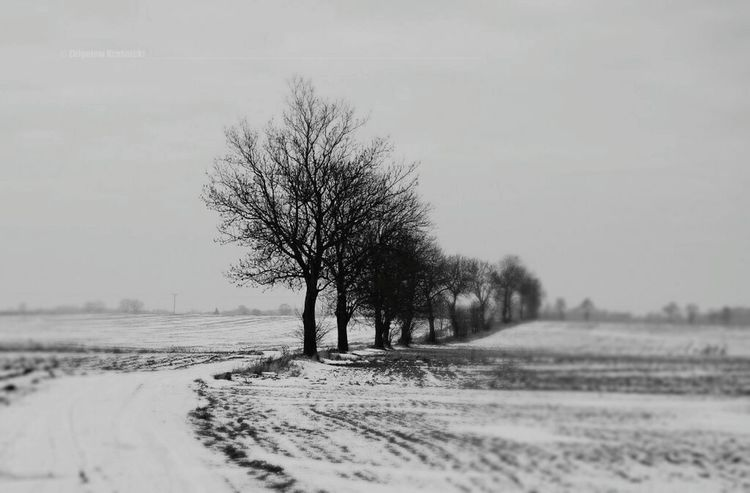 Poland Monochrome Blackandwhite Black&white Winter Natural Beauty Warmia Naturelovers Nature
