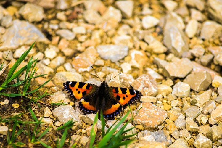 Butterfly Butterfly Collection Nature On Your Doorstep Eye4photography  EyeEm Gallery Open Edit Taking Photos