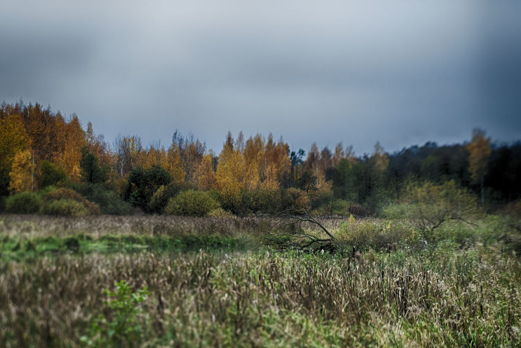 Experimental tilt-shift lens Helios 44-2 Minsk,Belarus Autumn Beauty In Nature Grass Helios 44-2 Landscape Loshica Nature No People Tree