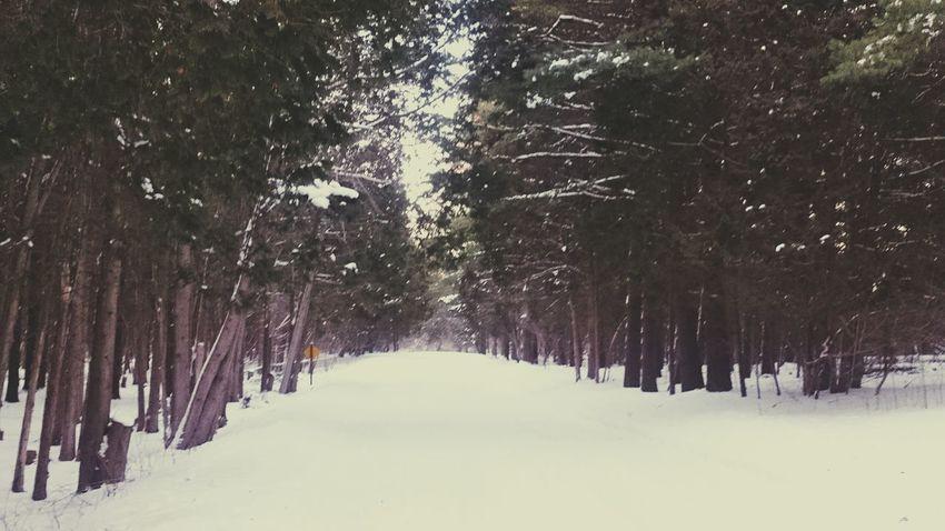 Elora Gorge Ontario, Canada Winter Wonderland Human Meets Technology Sony Z2 Photography