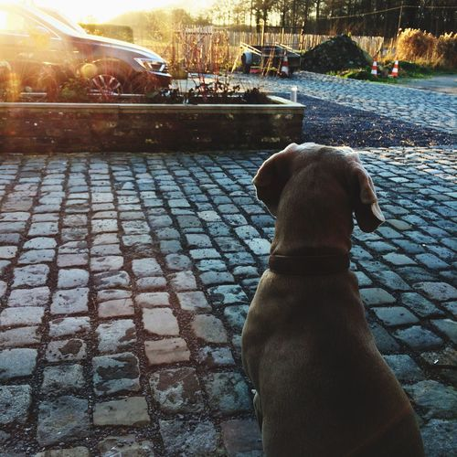 Enjoying Life Hello World Relaxing Taking Photos First Eyeem Photo Dog❤ Dogslife Sunset Wintertime