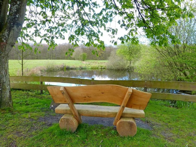 Springtime in Ostfriesland ... :-) Beauty In Nature Bench At Lakeshore Bench At See Branch Day Garden Garden Photography Lake Lake View Landscape Nature No People Ostfriesland Ostfriesland Kultur Ostfriesland Landschaft Outdoors Picnic Place Resting Place Scenics Sky Spring Springtime Tree Tree Trunk Water