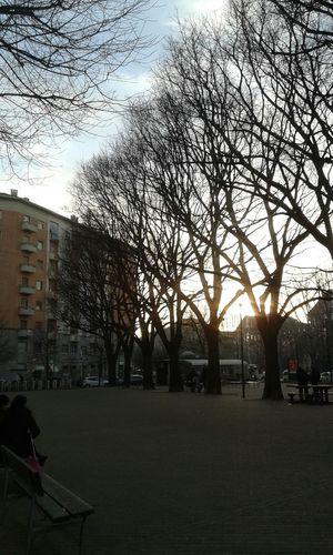 Alberi Trees Rami Piazza Square Pomeriggio Afternoon Noon Sole Sun Raggi Di Sole Sunshine Luce Light