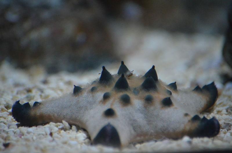 Animal Themes Aquarium Focus On Foreground Natural Pattern Pointy Selective Focus Starfsh Tennessee Aquarium