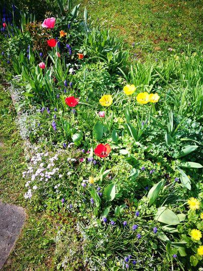 Frühling Im