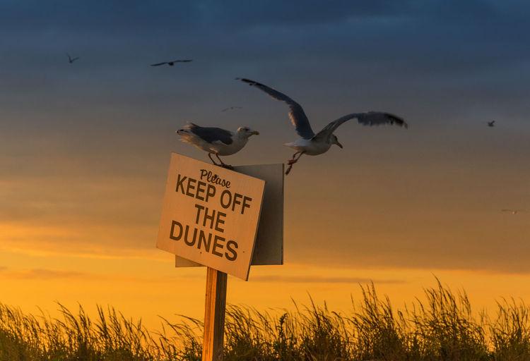 Birds over information sign against sky during sunset