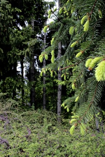 Beauty In Nature Day Fern Forest Freshness Green Color Growth Nature No People Outdoors Plant Scenics Tree