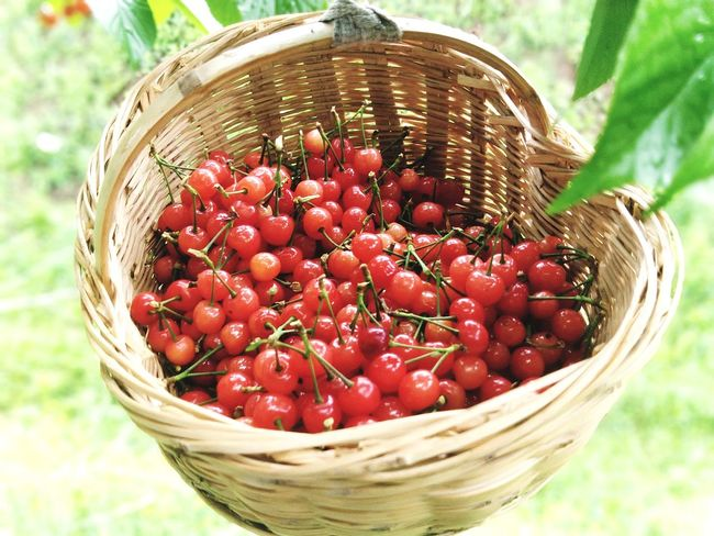 Fruit Red Picnic Basket Summer Close-up Food And Drink